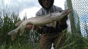 Northern Pike — Mathieu Godart