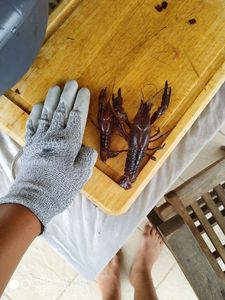Spinycheek Crayfish — TIM FISH (Youtube)