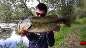 Largemouth Bass — Sullyvan Dvn