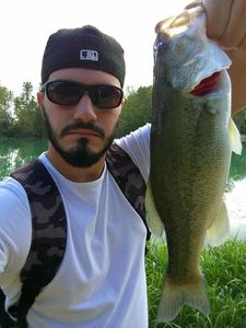 Largemouth Bass — Loris Trevisan