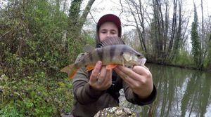 European Perch — Thibfishing 70