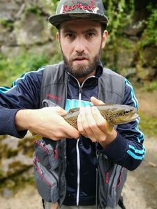 Brown Trout — Julien D'HALLUIN