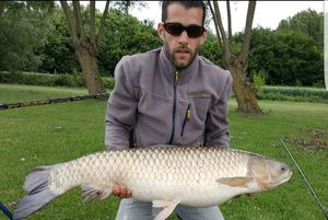 Grass Carp — Nicolas fishing59