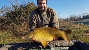 Common Carp — Antoine Leroux