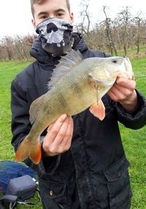 European Perch — Benjamin Auffret