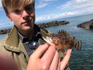 Brown Scorpionfish — Yannick JOUAN, WFFT