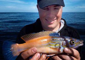 Vieille Coquette — Sebcricri Fishing