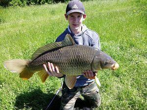 Common Carp — Hugo Grosjean