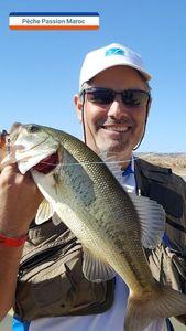 Largemouth Bass — Willy Lafon