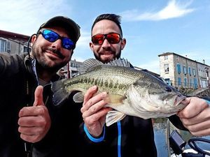 Largemouth Bass — Fabien Vallat