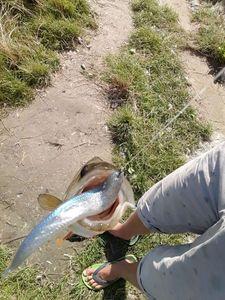 European Perch — arthur bouyer