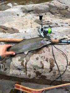 Rainbow Trout — Amaury Janik