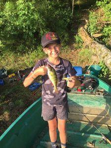 European Perch — le pêcheur fou
