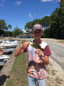 Largemouth Bass — Nolann Soun
