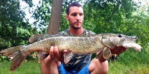 Northern Pike — Thomas Zanaboni