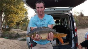 Mirror Carp — Pierre Turinetti