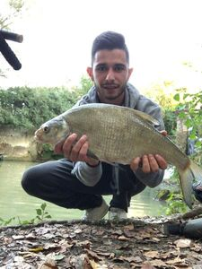 Common Bream — Lucas Aurieres