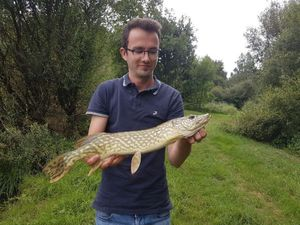 Northern Pike — François  Rigault