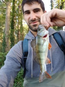 European Perch — Jeremie Nasiche