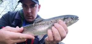 Rainbow Trout — Ben Chaumontel