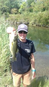 Largemouth Bass — Samuel Balcou