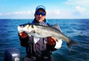 European Bass — Steve Guerin