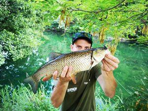 Chub — Tony Fish