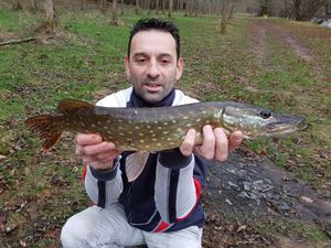 Northern Pike — Michael  Perri