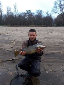 Brown Trout — Teddy Thome