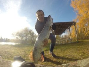 Northern Pike — Antony Ollivier