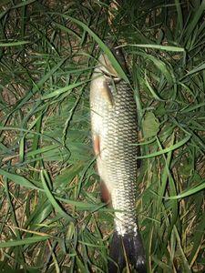 Chub — Ian (2Ways2Fish)