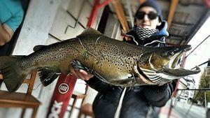 Lake Trout — Jo fisher