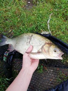 Chub — Valentin FishingBuffs