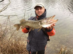 Northern Pike — Arnaud Gaudier