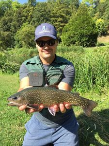 Brook Trout — Guillaume Lainé