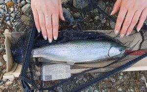 Rainbow Trout — Marie-Rose Perret (Thrill Lures)