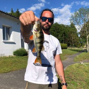 European Perch — Jordan Thibeaux (@renofishingco)