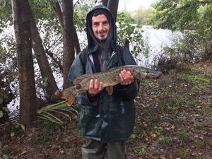 Northern Pike — Julien carnaillou