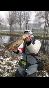 Northern Pike — quentin laroche
