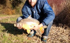 Mirror Carp — Niels Feeder