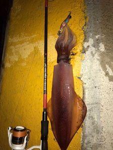 European Squid — Clément Larroque