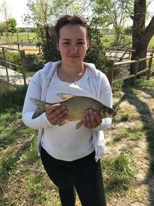 Common Bream — Laurie Narbonne