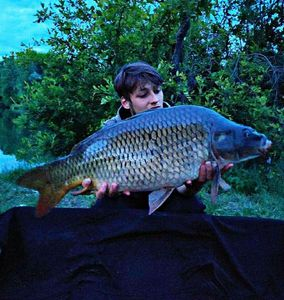 Common Carp — Hugo Faure