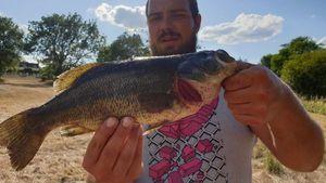 Smallmouth Bass — Yohann Crespel