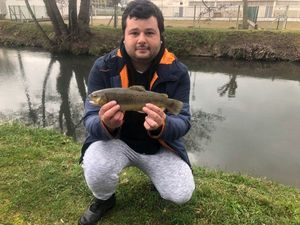 Brown Trout — Eli Levy