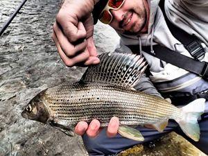 Grayling — jimmy maistrello guide de pêche