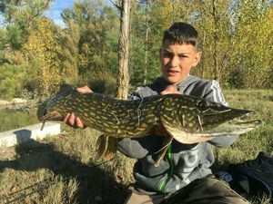 Northern Pike — Clement & Enzo
