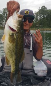 Largemouth Bass — Ben Rabay