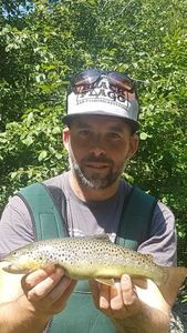 Brown Trout — Ricky Costa Silva