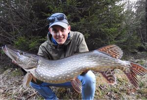 Northern Pike — Pike 2Life